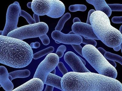 Jenis Bakteri yang Hidup di Kulit Manusia
