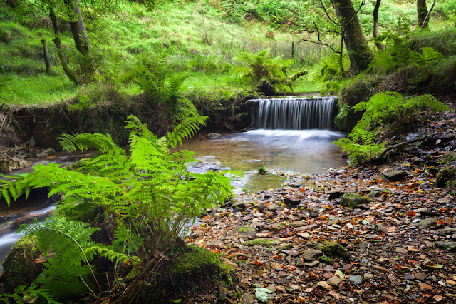 Simonsbath woodland and a lovely little waterfall in Exmoor National Park