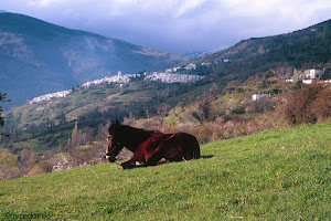 Mule with Capileira on the background