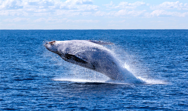 Travel tourism Sri lanka Galle to Trinco whale watching