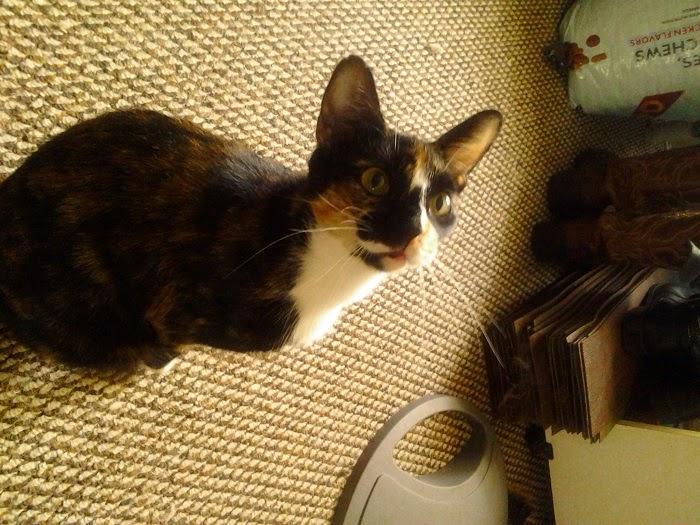 cat, Cornelius Peanutbutterus, Nelly
