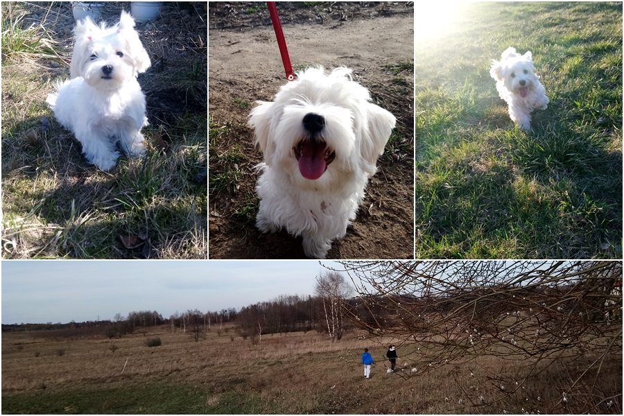 blog o zyciu z psem