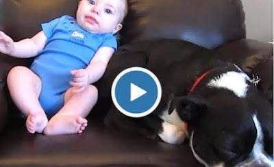 فيديو-الطفل-على-تويتر-يخفي-فيروس
