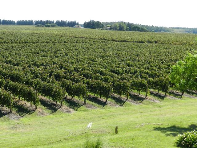 vinícolas perto de Montevideu - Uruguai (Juanicó)