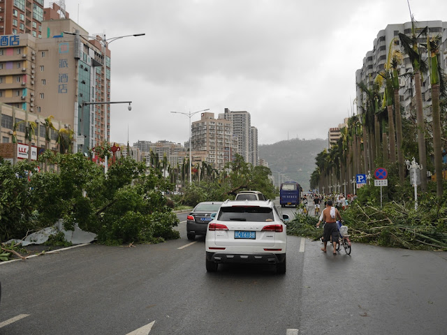 people walking on Yingbin South Road in Zhuhai after Typhoon Hato