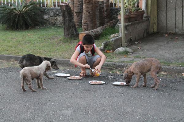Cảm phục cậu bé 9 tuổi xây dựng ngôi nhà chung cho những thú nuôi bị bỏ rơi