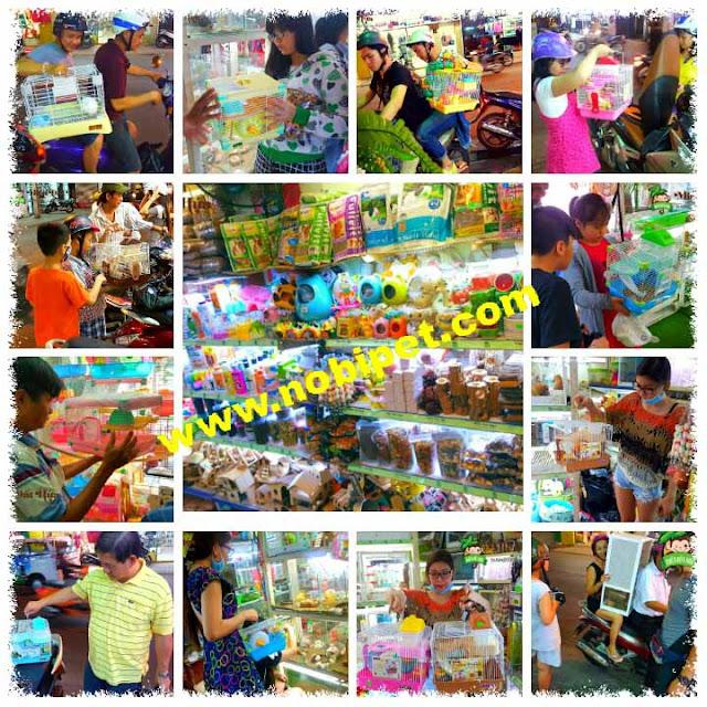 shop-hamster-nobipet-ban-chuot-canh-o-da-nang-4