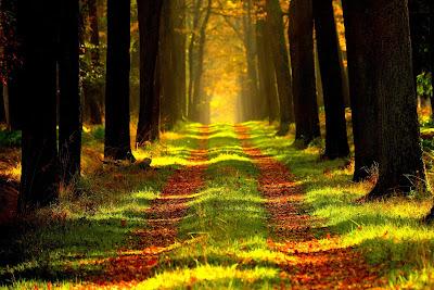 campo otoño