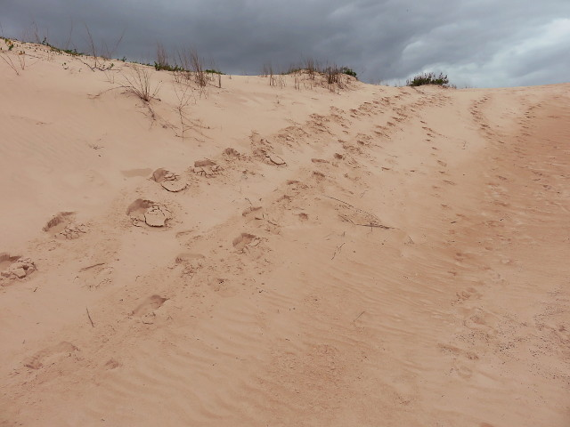 Foot prints on the dunes