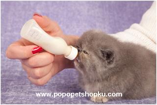 cara memberikan susu pada kucing 2 - popopetshopku.com