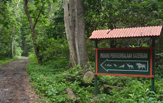 Hutan di Alas Purwo