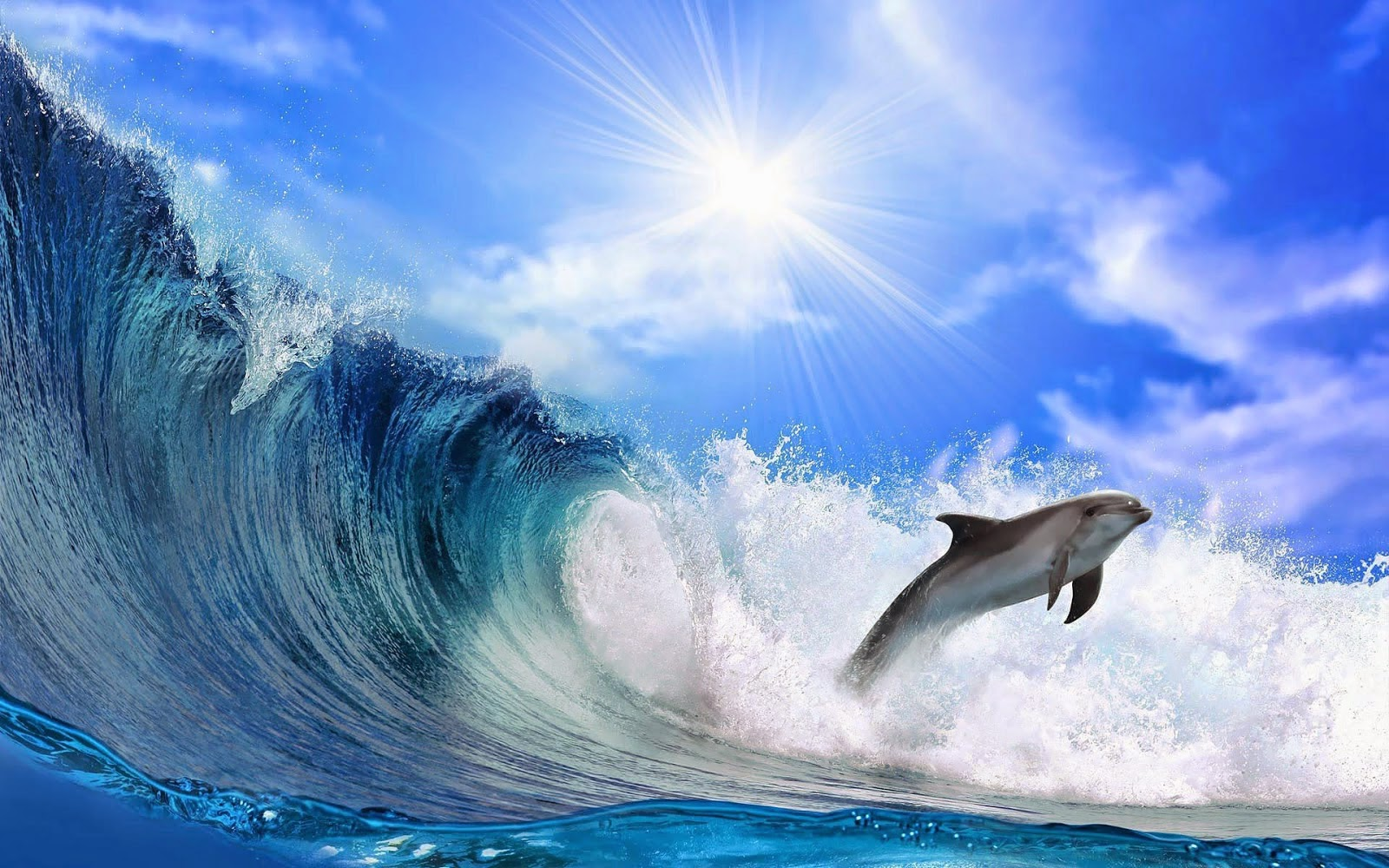 beautiful wallpaper of a dolphin and a big wave hd animals wallpapers