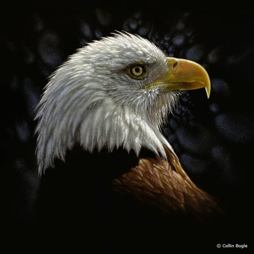 19-Bald-Eagle-Collin-Bogle-Animal-Wildlife-in-Art-www-designstack-co