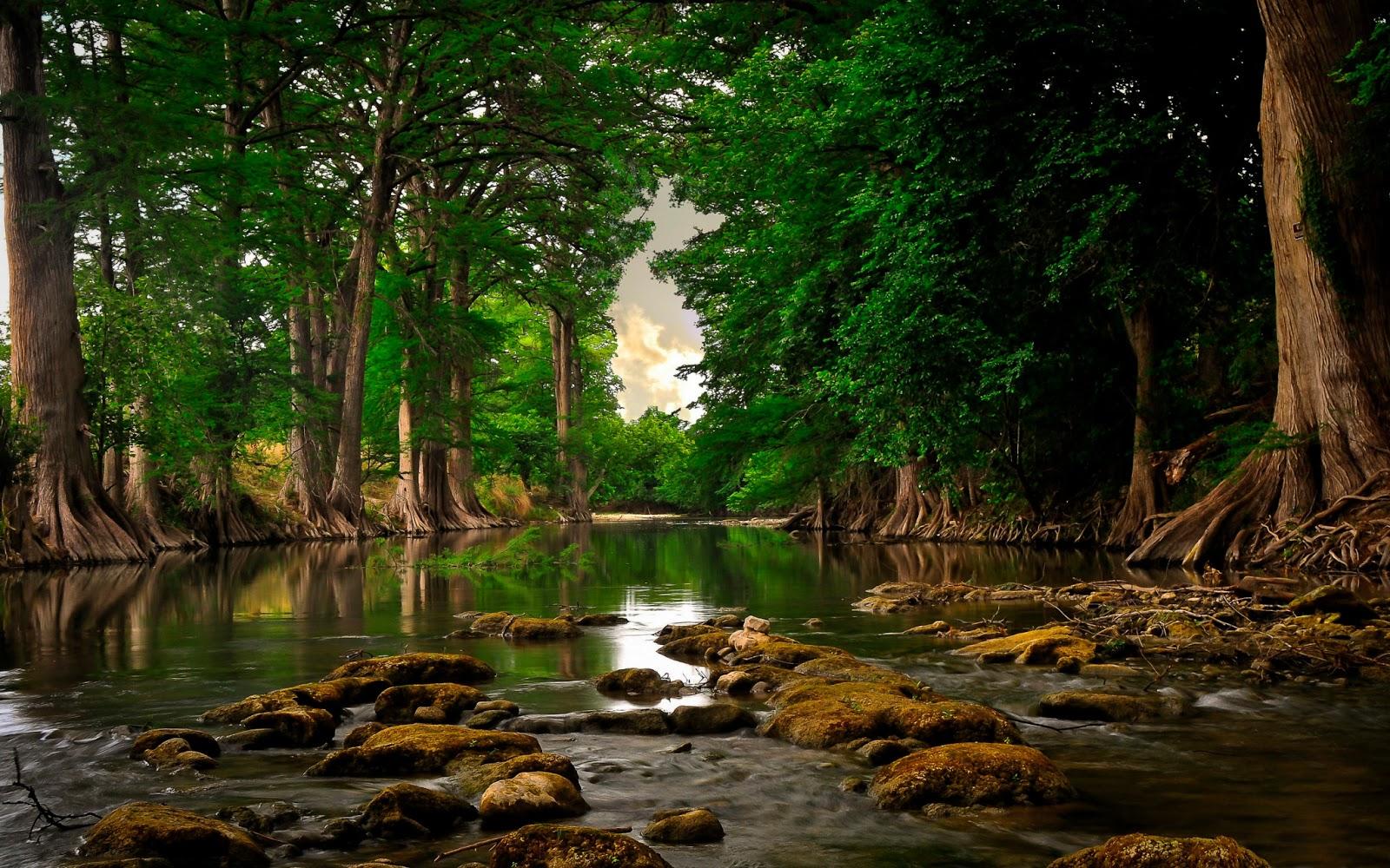 Beautiful Nature Wallpaper BackgroundsWallpaper Background