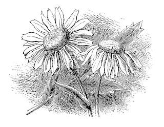 wildflower flower botanical artwork digital download image