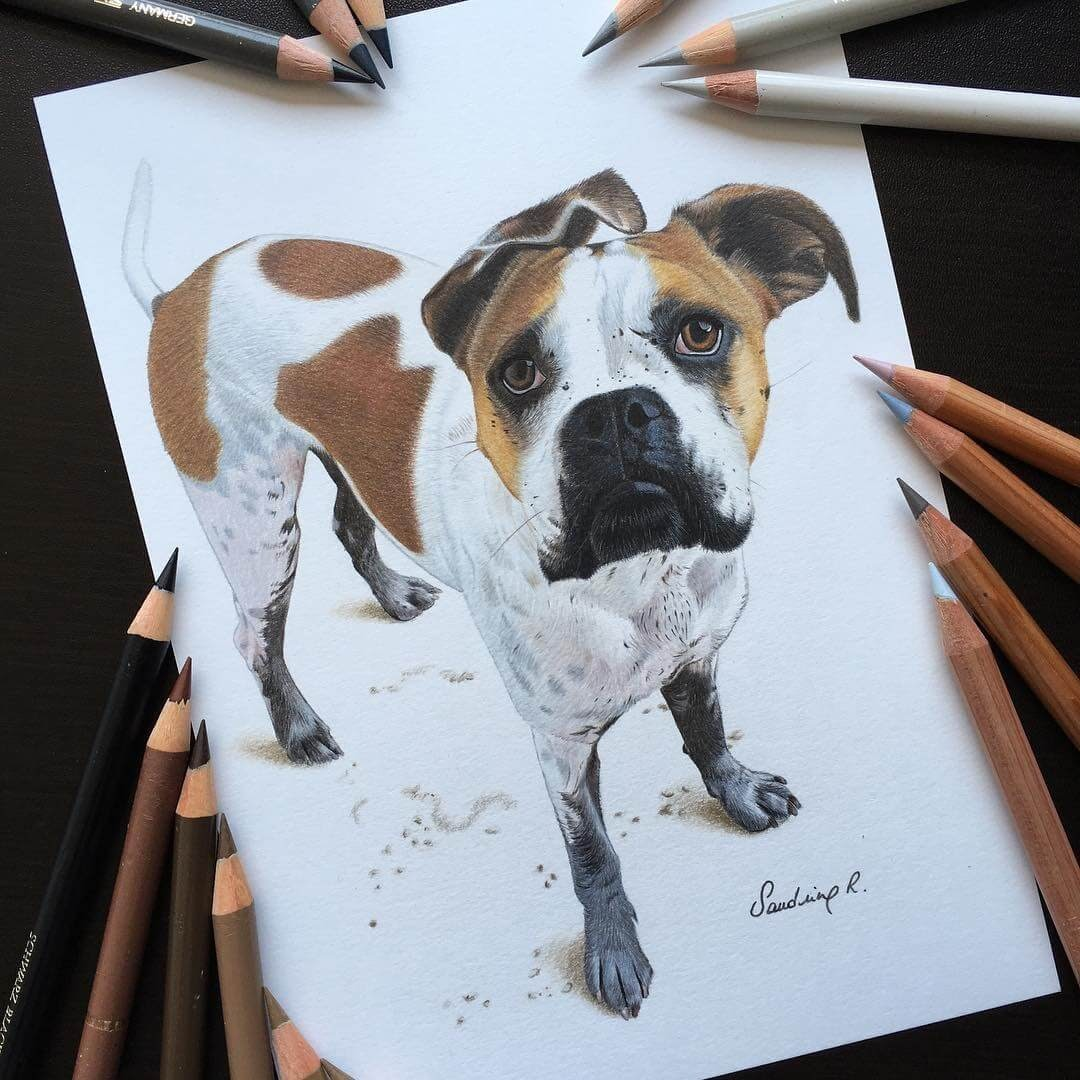 08-Mack-Sandrine-R-Sweet-Realistic-Animal-Portrait-Drawings-www-designstack-co