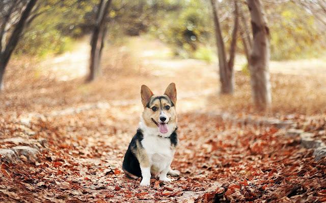 Hond in het bos tussen de herfstbladeren