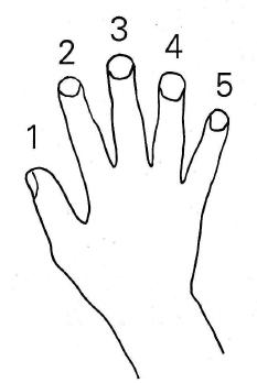 """<img alt=""""Numeracja palców"""" src=""""numeracja-palców.jpg"""" />"""