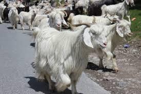 https://www.goatfarming.ooo
