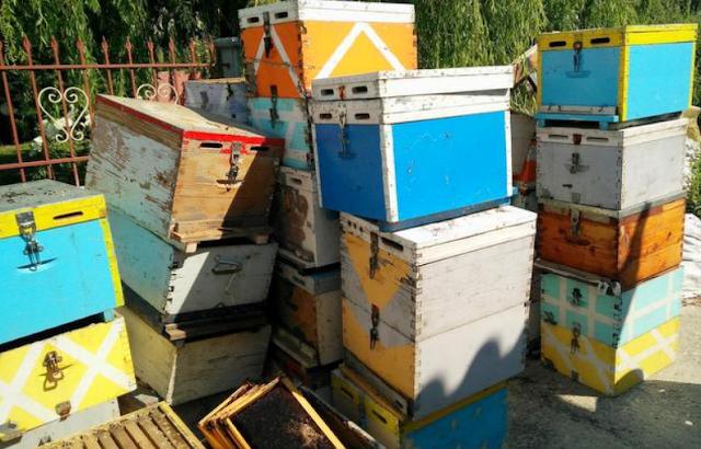 Έπιασαν κλέφτη μελισσιών. Δε φαντάζεστε τι ισχυρίστηκε στην αστυνομία...