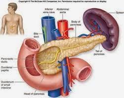 pankreas hormon insulin