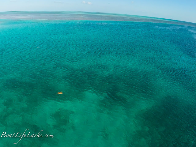 Sea Turtle swimming on Great Bahama Banks, South Cat Cay, Bahamas