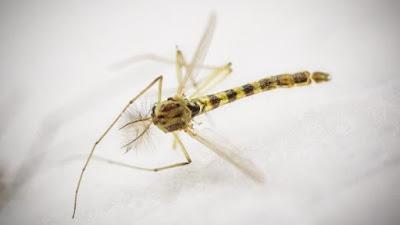 http://www.signalement-moustique.fr/