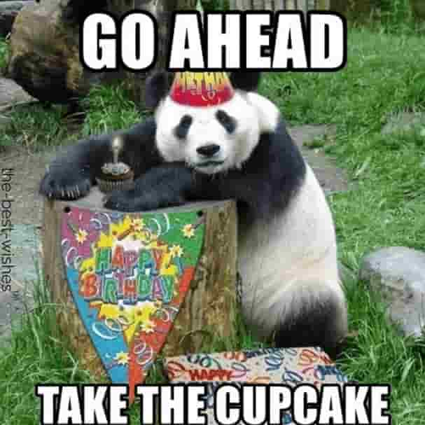 panda memes for birthday
