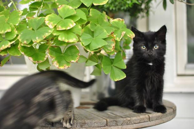 kattungar hannashantverk.blogspot.se kittens