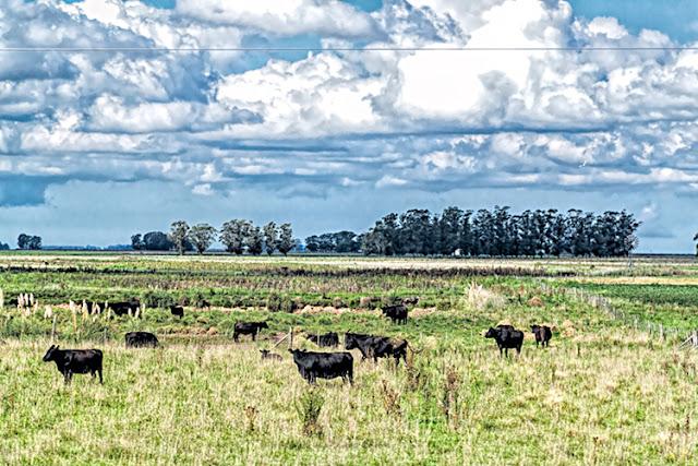 Paisaje rural con vacas y nubes.