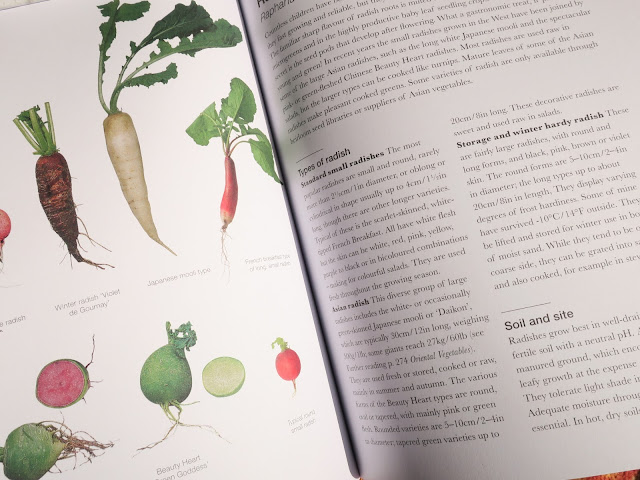 Radishes in 'The Salad Garden' by Joy Larkcom'.
