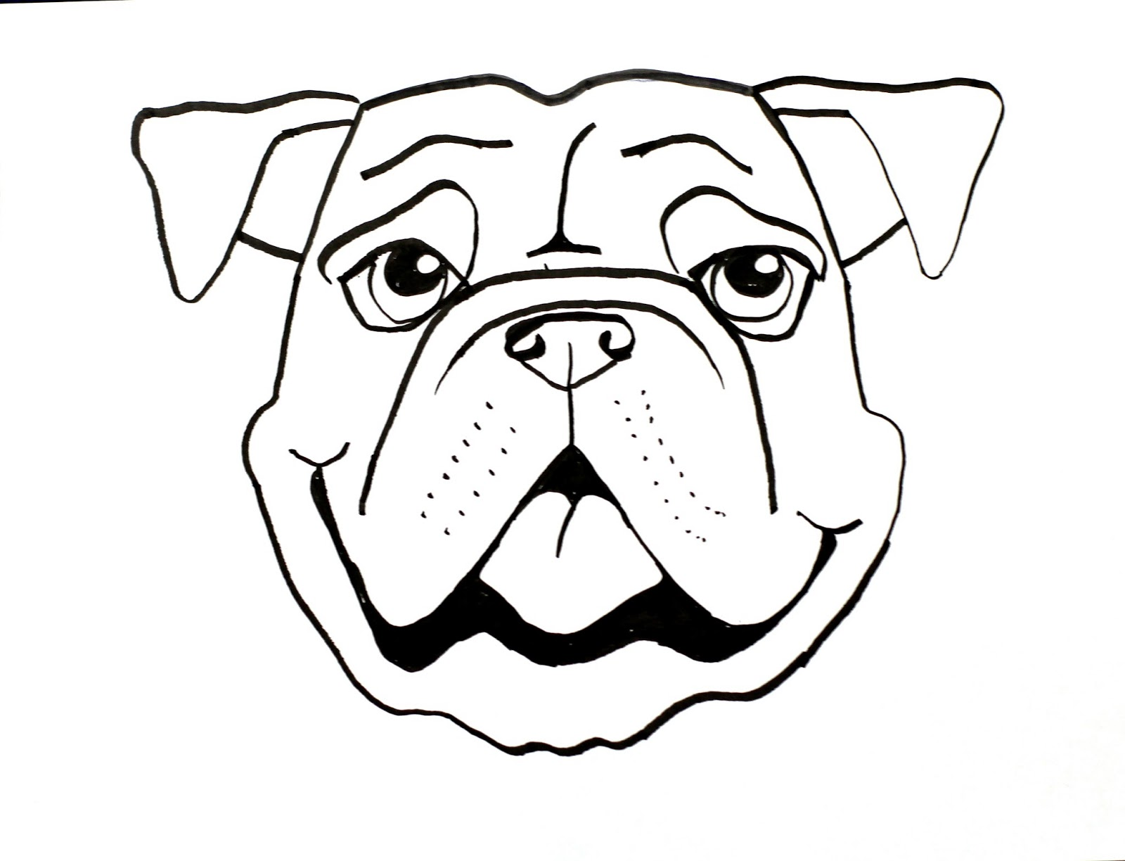 Line Drawing Animal Face : Smart class bull dog draw a long