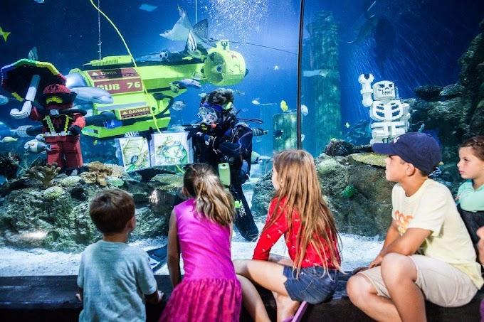 Legoland cari duta cilik hidupan laut