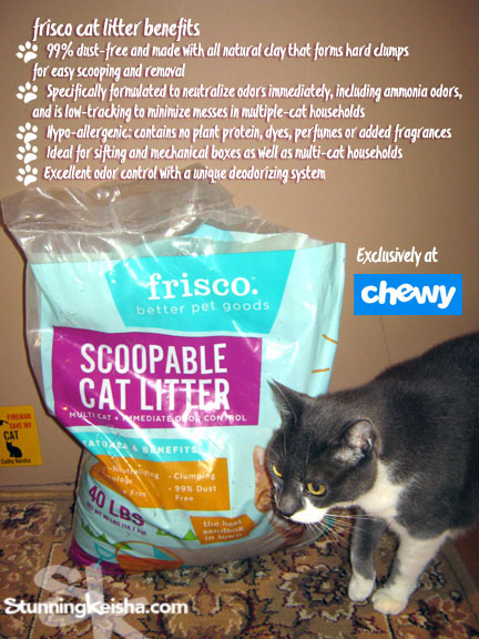 Treat Your Cat to the Best Sandbox in Town #ChewyInfluencer