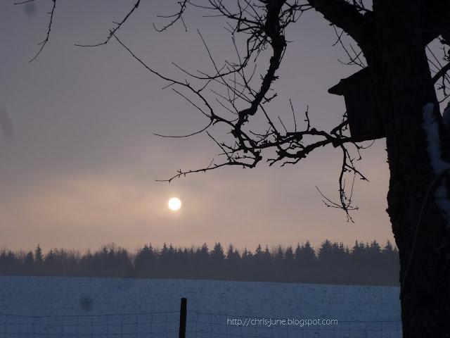 Apfelbaum mit Vogelhäuschen - Sonnenaufgang im Januar