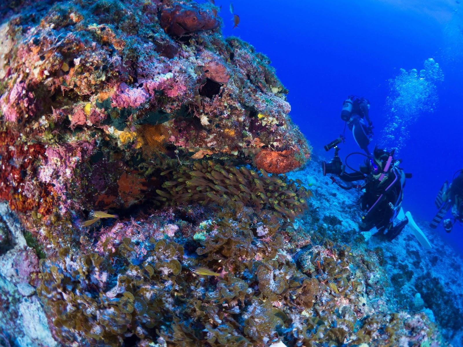 沖繩-沖繩潛水-沖繩浮潛-慶良間群島-座間味島-阿嘉島-渡嘉敷島-推薦-潛點-Okinawa-scuba-diving-snorkeling