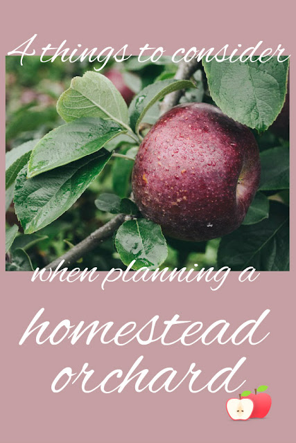 Planting fruit trees is more than just digging a hole. Here are 4 things to consider before you plant fruit trees or start a homestead orchard.