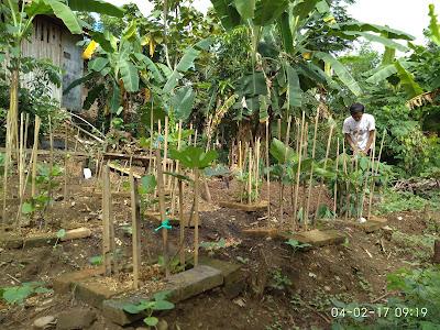 petani tin karawang, urban hidroponik