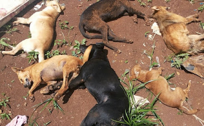 Resultado de imagem para Polícia investiga morte de vinte cachorros por envenenamento no Agreste
