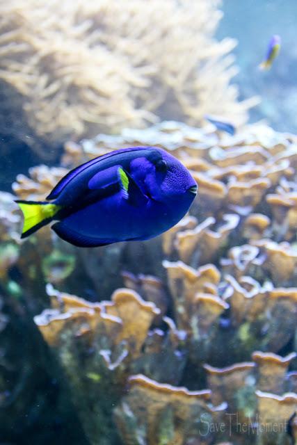 Doktorfisch Aquarium Luisenpark Mannheim