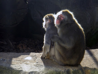 MONKEYS CUDDLE