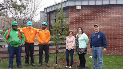 Earth Day tree planting at Eckley Miners' Village