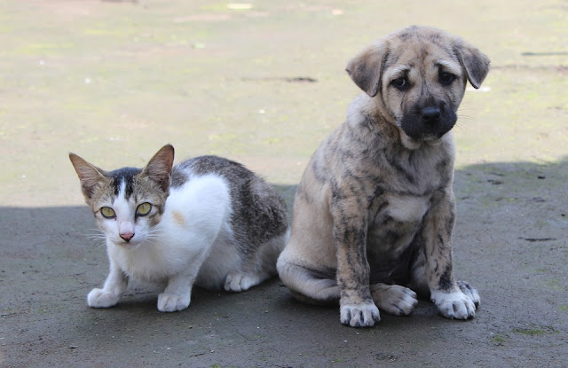 How-to-Introduce-a-Dog-to-a-Cat,Pet-Care-Tips,Cat-Care-Tips,Puppies