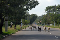 Ziegenherde - goats