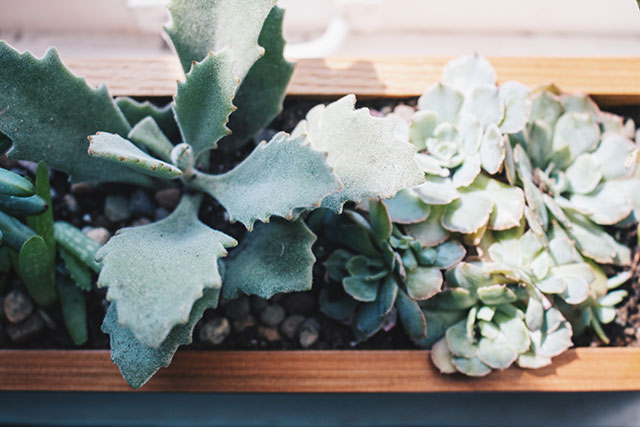 How to fill a windowsill box with succulents