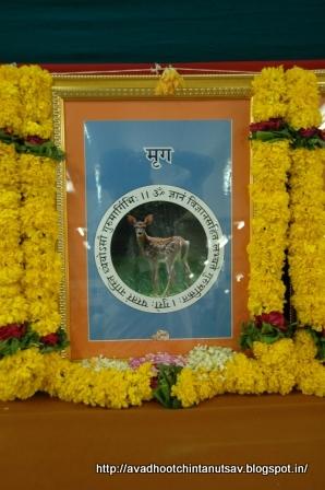 24 gurus of Dattatreya, positive energy, Avdhoot, Mahavishnu, Lord Shiva, Dattaguru, secure path, Shree Harigurugram, Avdhootchintan, deer