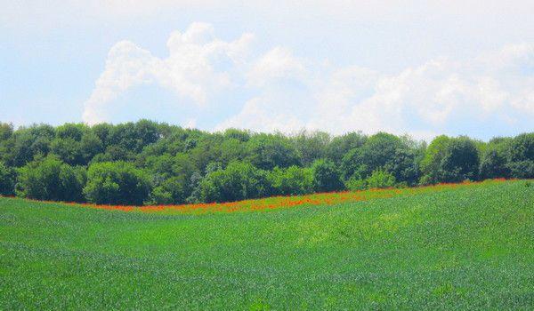 Beautiful field near the forest