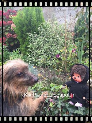 kiki monchhichi animaux chien yorshire silky terrier