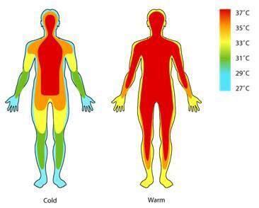 อุณหภูมิภายในร่างกายเพิ่มขึ้นตามอุณหภูมิภายนอก
