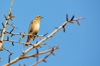 Bird on branch, Wikimedia Commons,  Mathew Schwartz